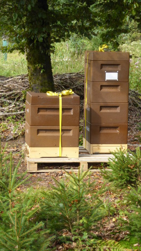 Bienenkästen am Möösliweg