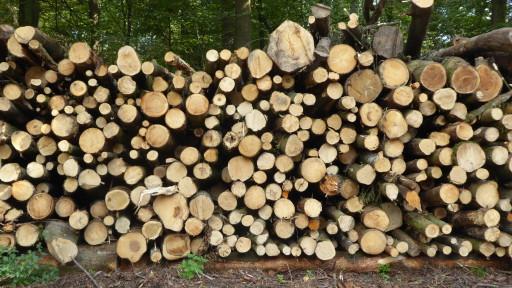 Holz zum Hacken bereit