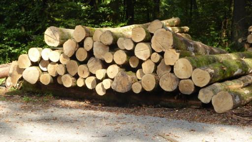 Brennholz in langer Form