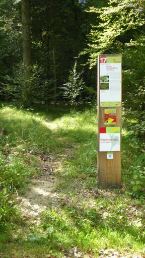 Sol. Waldwanderweg: Tafel 17