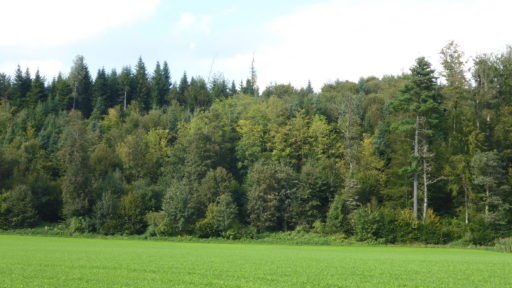Forst Brünnelirainweg