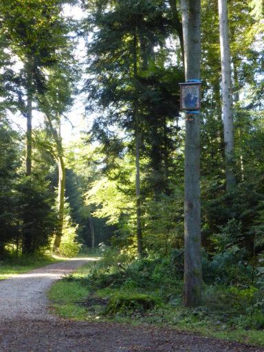 Neue Tafeltanne am Wolfwilerweg