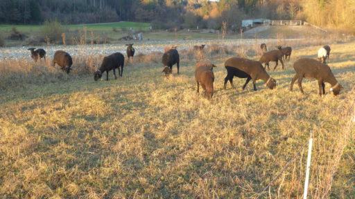 Tierische Biotoppflege
