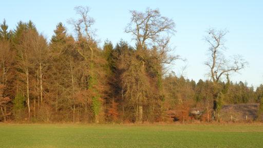 Herbst am Grubenweg