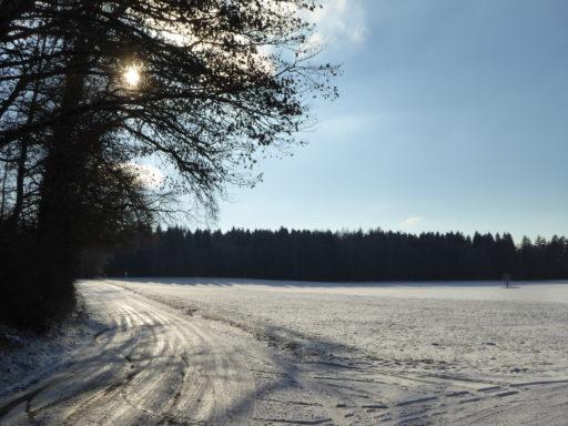 Winterliche Ägerten