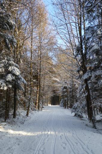 Winterlicher Eichbanhöhenweg