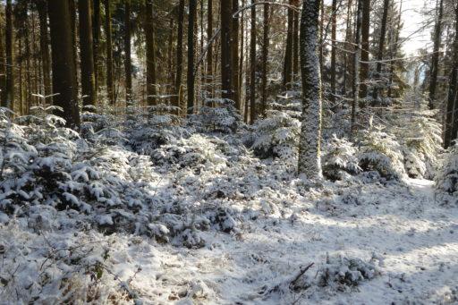 Winterbild am Eichbanhöhenweg