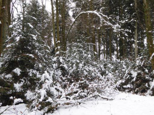 Winter am Wolfwilerweg
