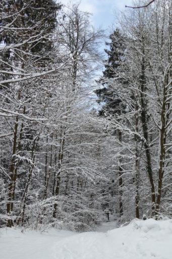 Winter am Eichbanweg