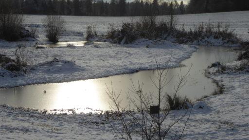 Biotop-Weiher im Winter