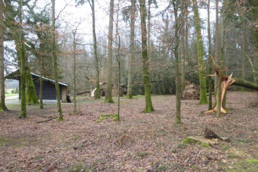 Burglind 2018 - Schäden beim TSVN Waldhaus