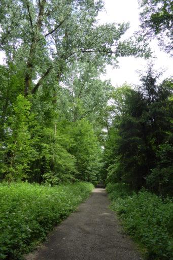 Behördenwaldgang 2015