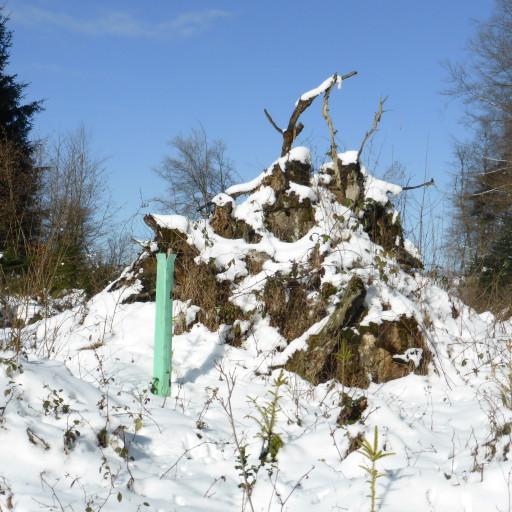 Winterlicher Baumstrunk