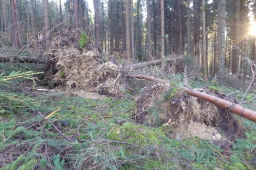 Burglind 2018 - Im Eichban