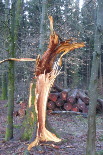 Sturm Burglind 2018